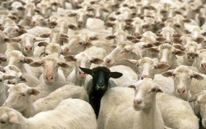Be the black sheep in your industry - Stand Out